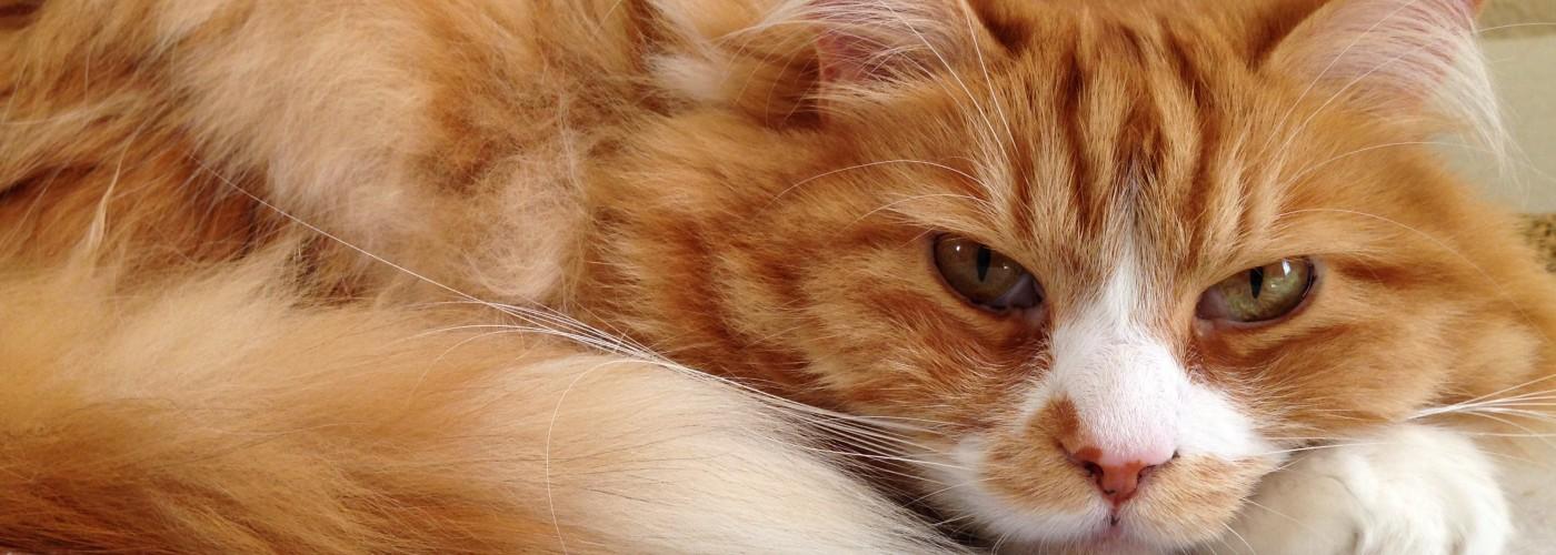Katze liegt in der Katzenpension Herzenswunsch bei Kulmbach